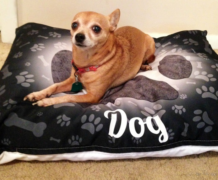 iLeesh 'I Love my Dog' Pet Bed | Princess approved! #Review