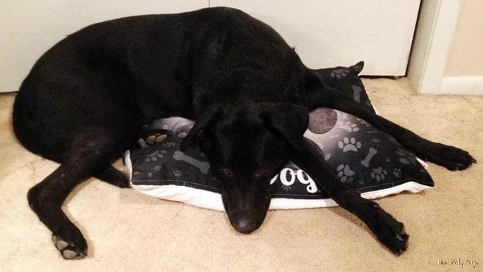 iLeesh Pet Bed - Ozzy