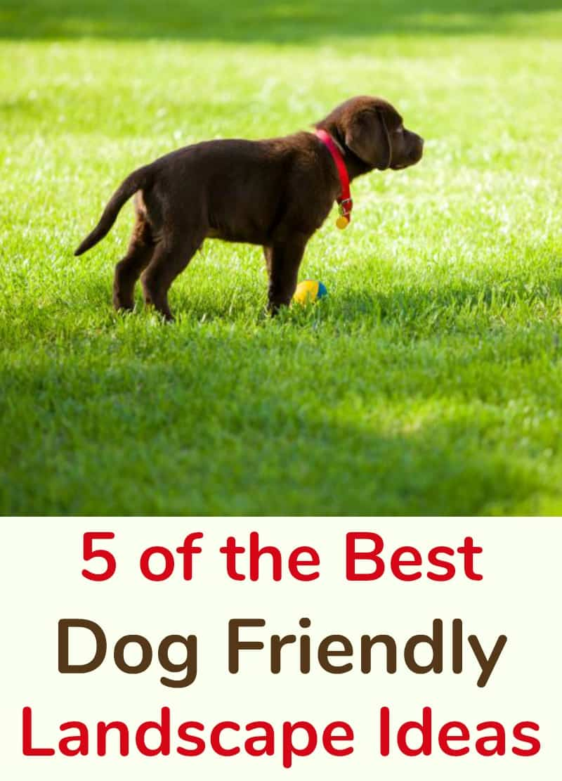 5 Of The Best Dog Friendly Landscape Ideas Miss Molly Says