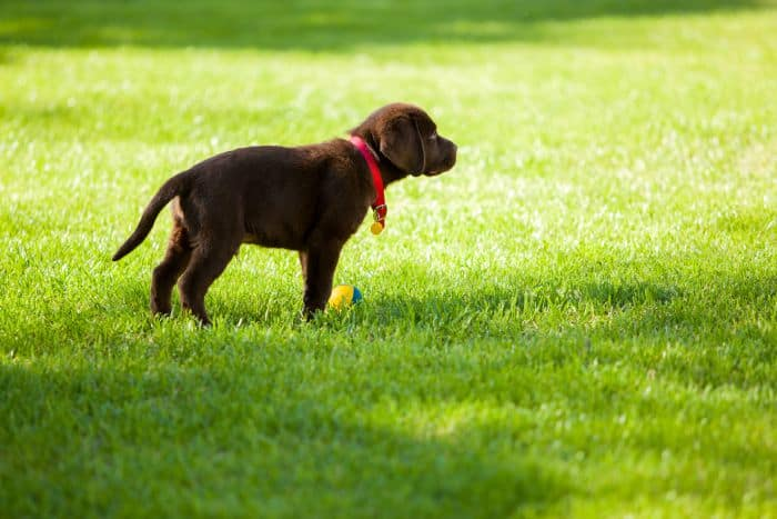5 of the Best Dog Friendly Landscape Ideas
