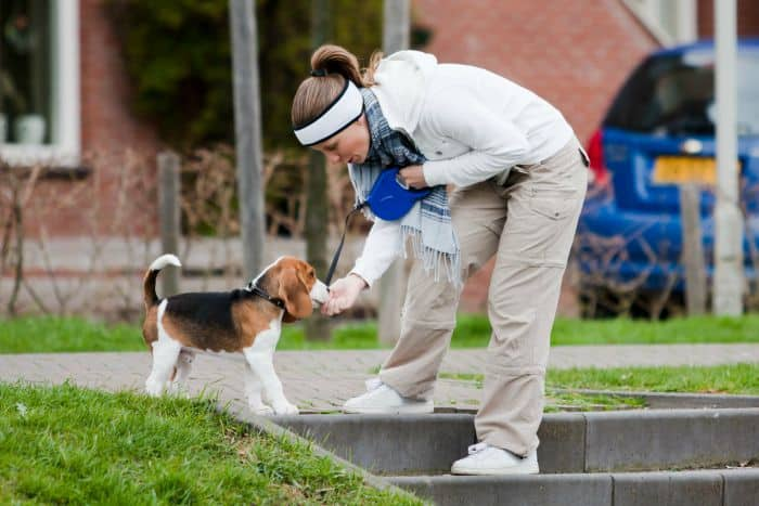 Dog Training 101: 5 Important Tips and Commands for Training a Sociable Pup