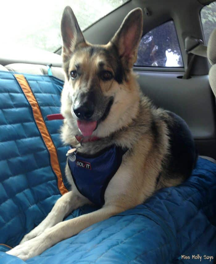 Solvit Deluxe Car Safety Harness is a Necessity to Keep your Furry Friend Safe! #Review