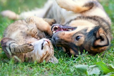 Tips For Bipetual Families To Keep The Peace With Cats & Dogs