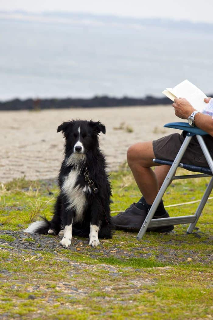 Your New Best Friend: 5 Reasons to Get a Dog During Retirement