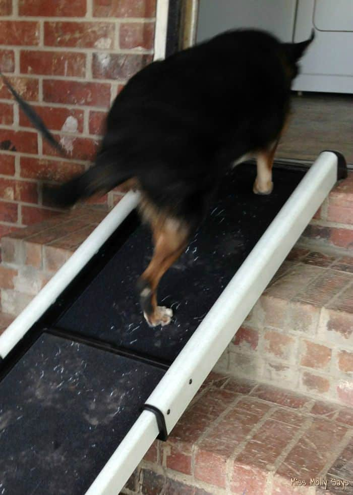 Solvit Smart Ramp: Give Your Pet a Lift and Save Your Back! #Review