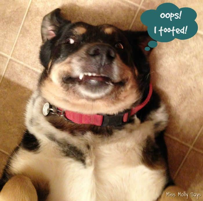 Solving Smelly Pet Odors with Febreze! #Petiquette