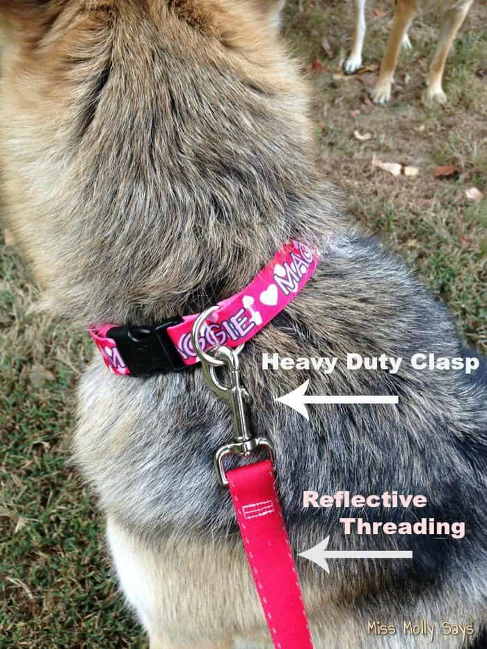 Hot Dog Collars Simple Solids Leash with Reflective Stiching