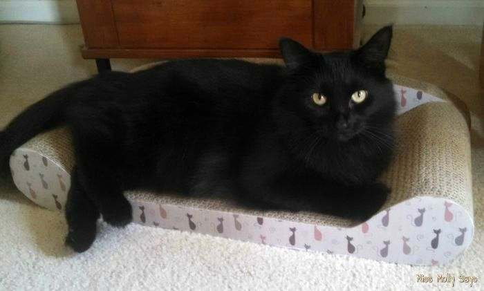Kitty Couch and Cat Scratcher All In One #Review