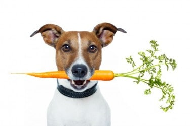 What to Believe: 5 Bogus Myths about Dog Nutrition and Diet