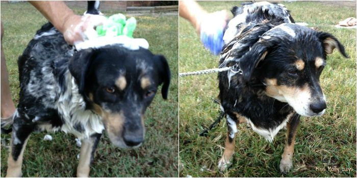 Woof Pouf for Dogs Makes Bath Day Easy! #WoofPouf