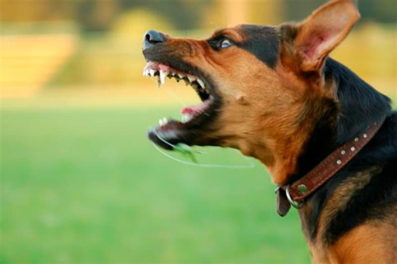 How to Handle an Aggressive Dog at the Dog Park