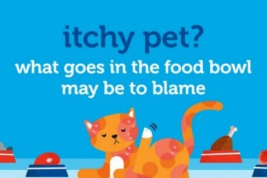 Itchy Pet, Common Food Allergies and Symptoms in Pets