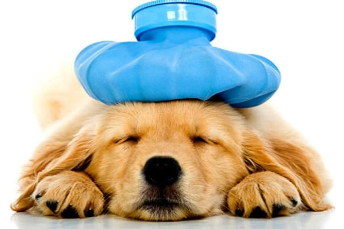 Pup in Peril: Top 4 Threats to Your Dog's Health