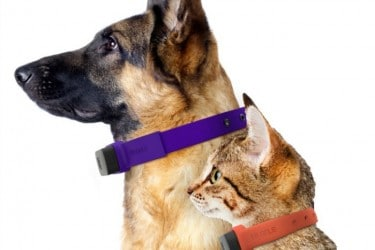 Keep Your Pets Safe with a GPS Tracker Collar! #NuzzleSmartCollar