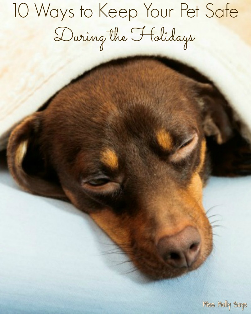 10 Ways to Keep Your Pet Safe During the Holidays