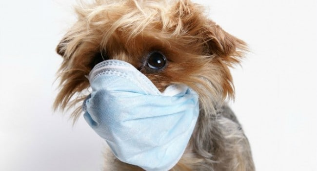 4 Warning Signs That Your Dog Has a Serious Medical Condition
