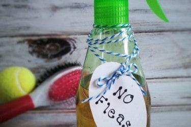 All Natural Flea Prevention & Control