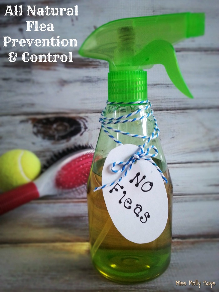 All Natural Flea Prevention & Control banner