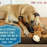 #Win an Armarkat Memory Foam Orthopedic Pet Bed and KONG Cozie Toy! - ends 11/26 US Only