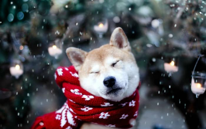 Best Practices to Keep Your Dog Healthy During Winter