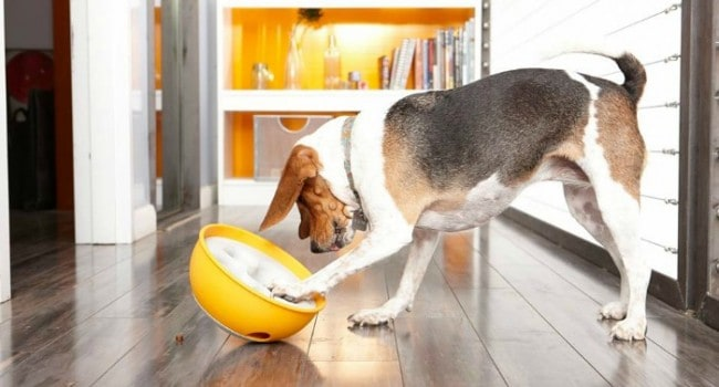 PAW5 Rock 'N Bowl Turns Mealtime into a Fun Puzzle Solving Challenge Dogs Love!