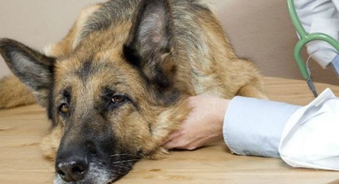 Pet Protection: Signs it Might be Time for a Checkup