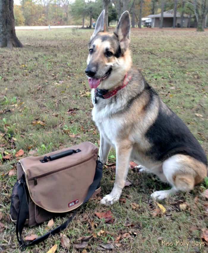 Solvit HomeAway Travel Organizer Kit for Pets
