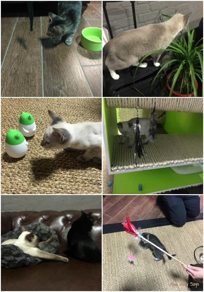 Our Fun Day at the 2015 Purina Better With Pets Summit #BetterWithPets - cat play room