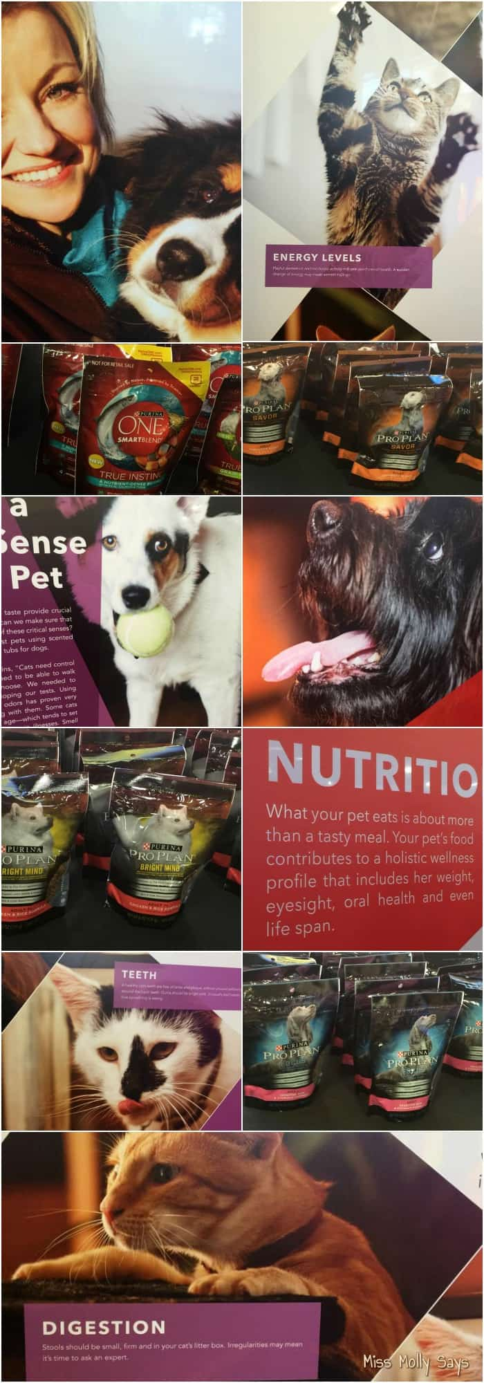 Our Fun Day at the 2015 Purina Better With Pets Summit #BetterWithPets