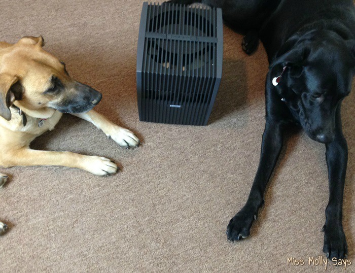 Venta Airwasher & Humidifier is Great for Pet Allergies #VentaFamily #Review #ChristmasMM15