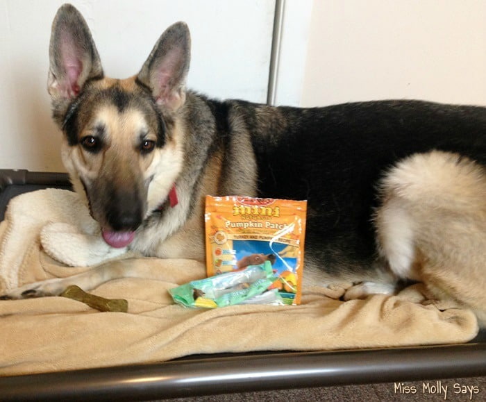 Zuke's Mini Naturals Pumpkin Patch Dog Treats and Dental Chews