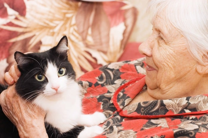 Constant Companion: The Most Important Daily Tips for Your Pet