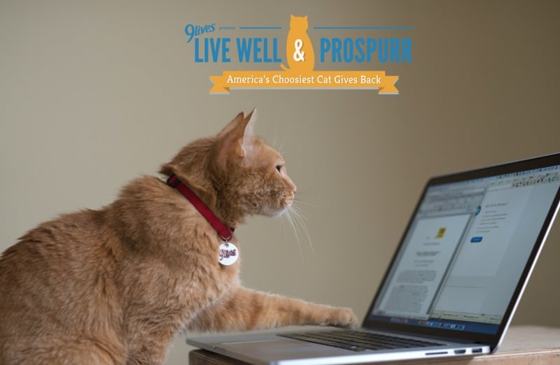 9 Lives' Morris the Cat Helps Us Help Hungry Kitties #MorrisFeeds
