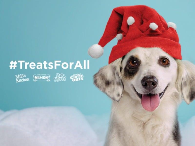 Doggy Gift Box 1