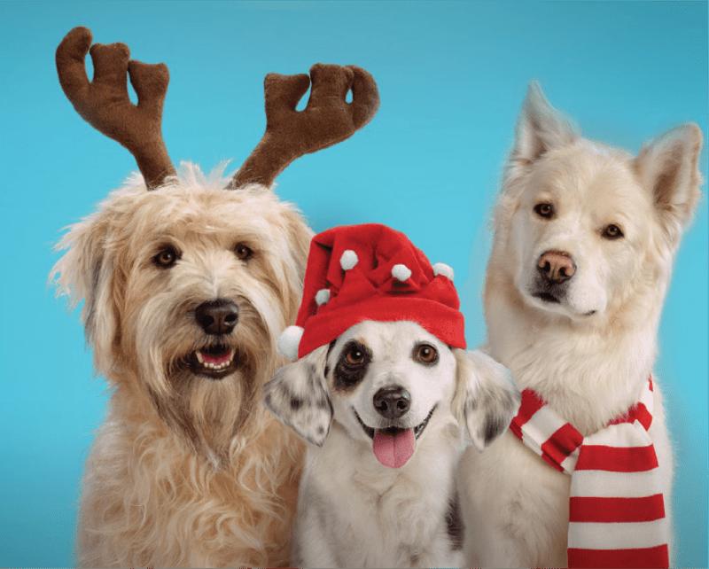 Doggy Gift Box 2