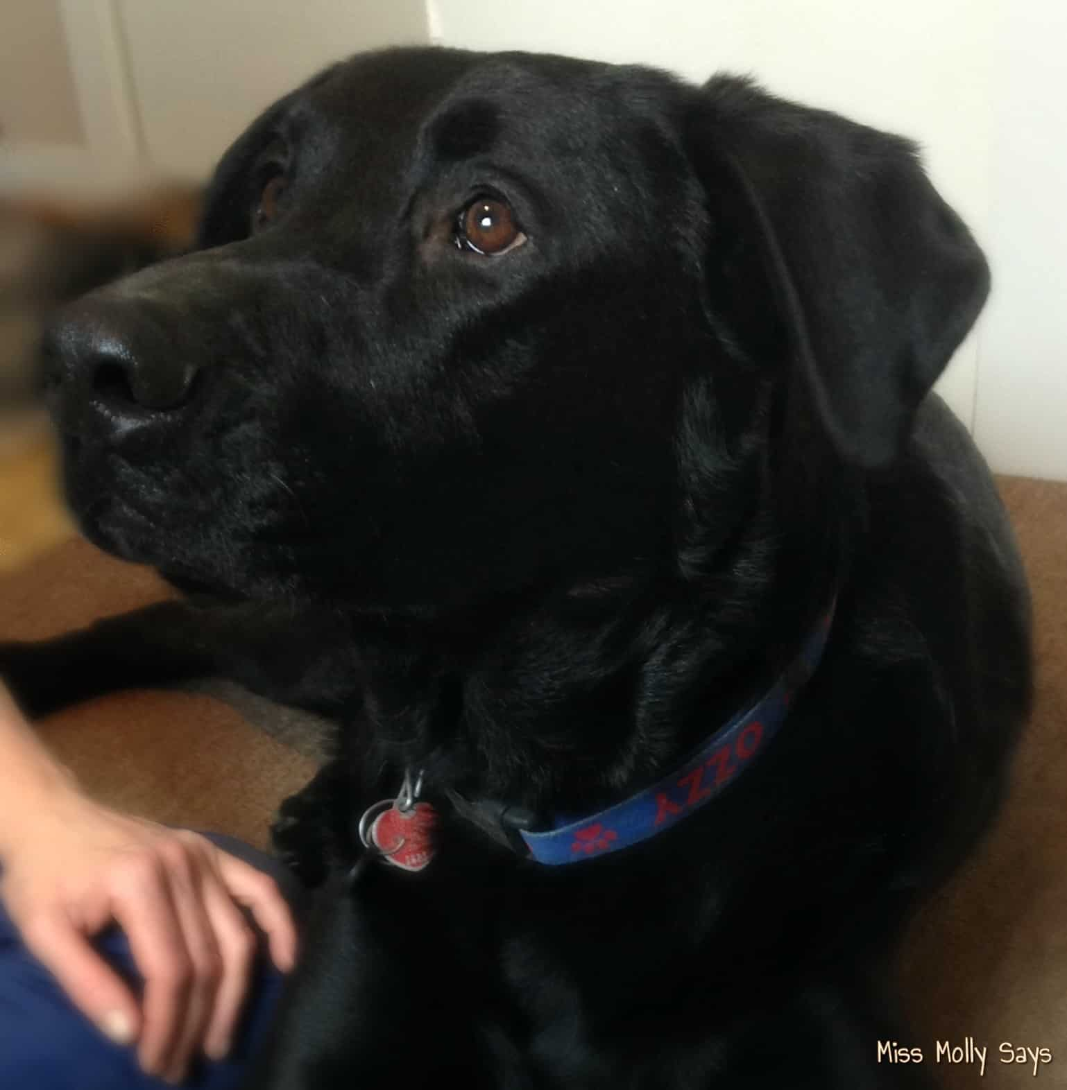 A Hero in the Form of a Big Black Dog #MyPetisMyHero