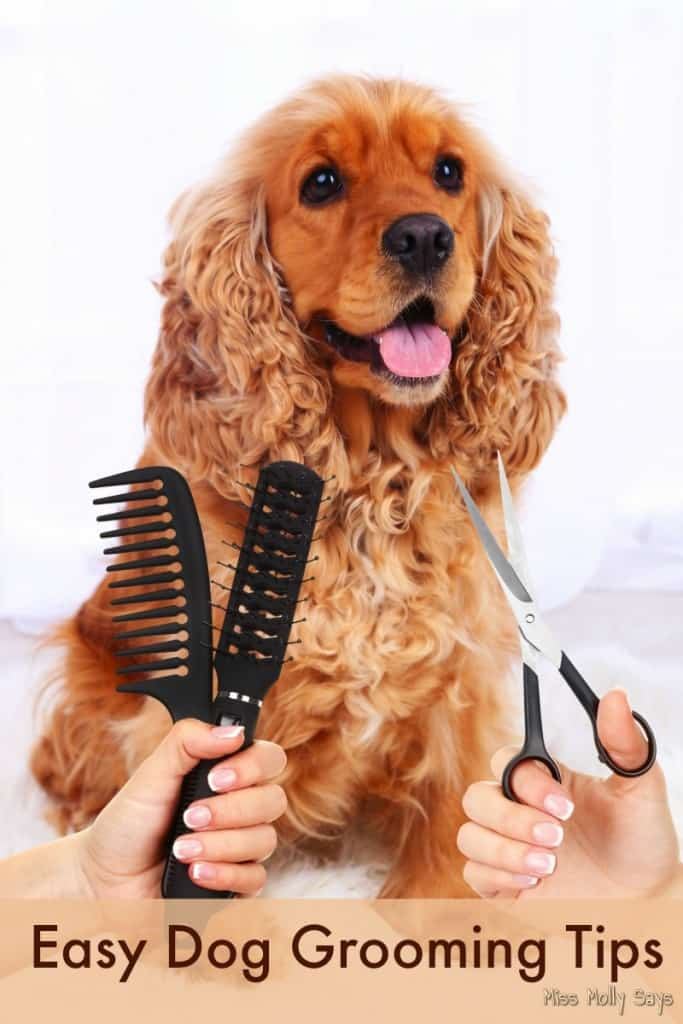 Easy Dog Grooming Tips