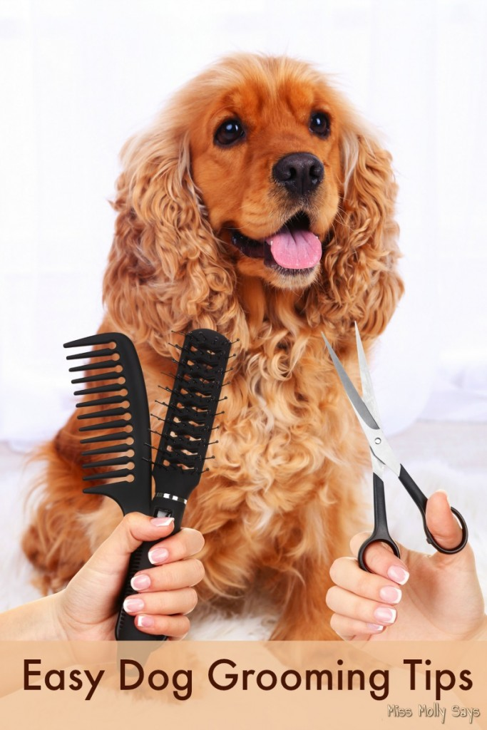 Easy Dog Grooming Tips