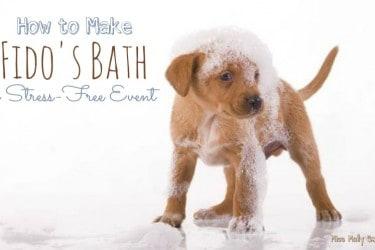 How to Make Fido's Bath a Stress-Free Event