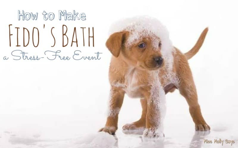 How to Make Fido's Bath a Stress-Free Event