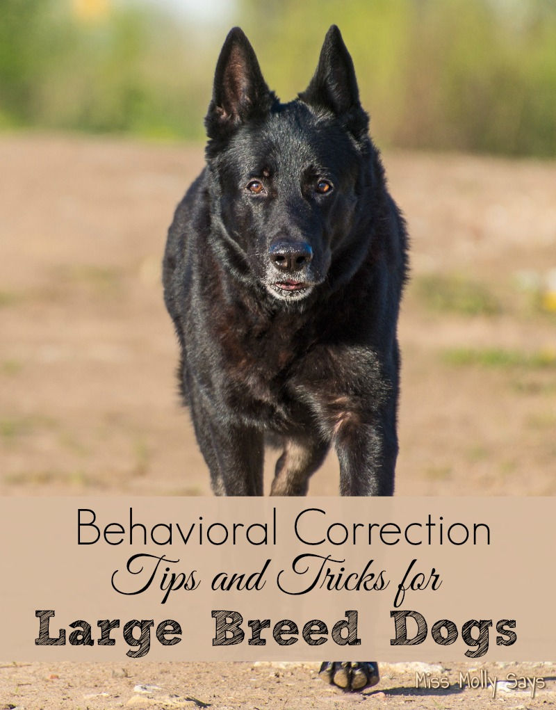Behavioral Correction Tips and Tricks for Large Breed Dogs