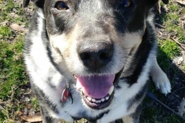 5 Ways I Show My Pets Love #LoveYourPetEveryDay