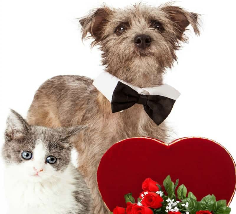 Pamper Your Pets For Valentine's Day