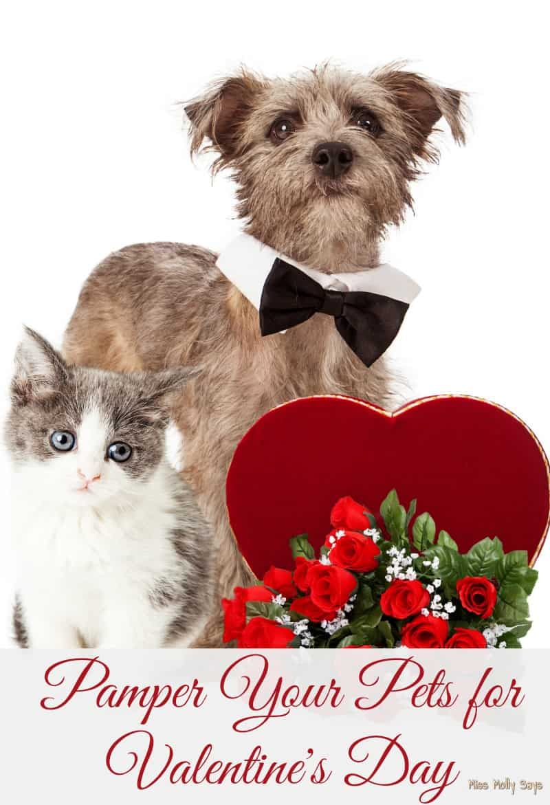 Valentine S For Dogs Toys : Pamper your pets for valentine s day miss molly says