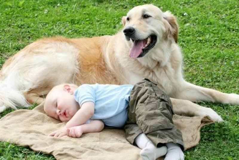 7 Reasons your Family Needs to Adopt a Golden Retriever