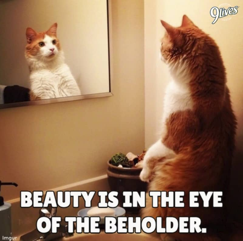 9Lives - beauty is in the eye of the beholder