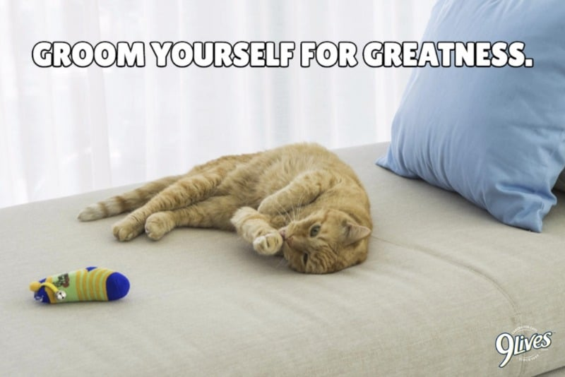 9Lives groom yourself for greatness
