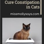 Natural Ways to Cure Constipation in Cats