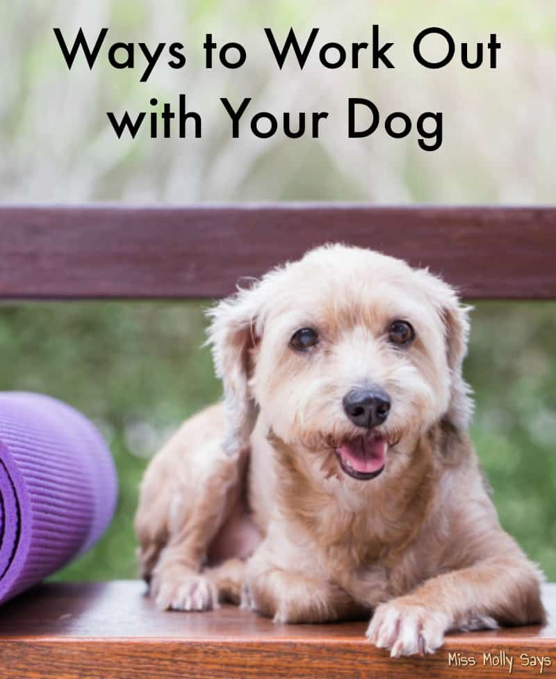 Ways to Work Out with Your Dog
