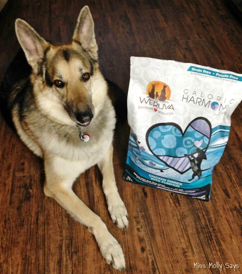 Weruva Caloric Harmony: High Protein Low Carb Dog Food #WeruvaDog